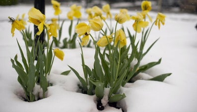 How Many Days Is It From the Begining of the Year Until Spring?