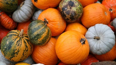 How Many Kinds of Pumpkins Are There?