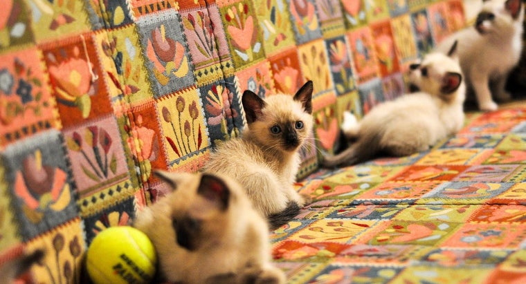 How Many Kittens Are Typically in a First Litter?