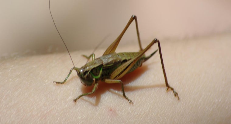 How Many Legs Does a Grasshopper Have?