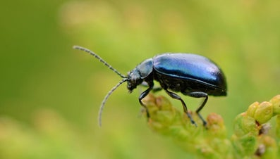How Many Legs Does an Insect Have?