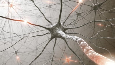 How Many Nerves Do We Have in Our Bodies?
