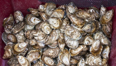How Many Oysters Are in a Bushel?