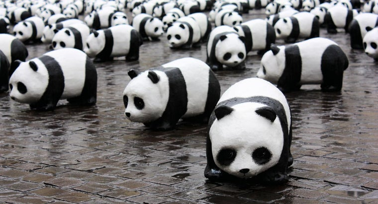 How Many Pandas Are Left in the World?