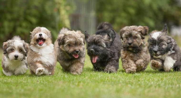 How Many Puppies Can A Dog Give Birth To Referencecom