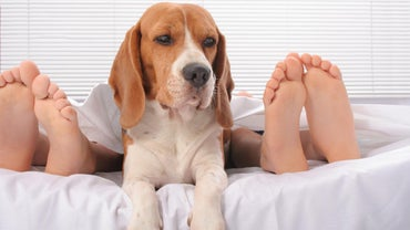 How Many Toes Do Dogs Have?