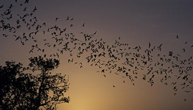 How Many Types of Bats Are There?