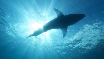 What Does It Mean When You Dream of Getting Attacked by Sharks?
