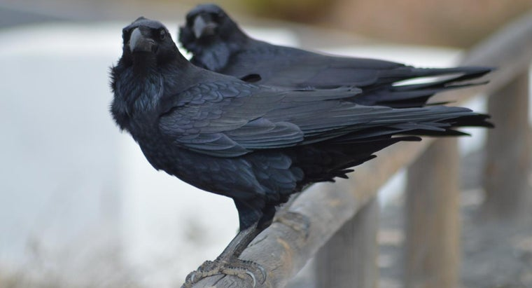 What Does It Mean to See a Dead Crow in Front of Your House?