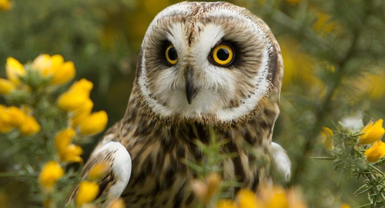 What Does It Mean When Someone Sees An Owl During The Day