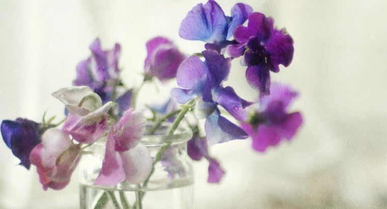 What Is the Meaning of Sweet Pea Flowers?