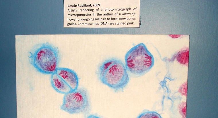 Why Is Meiosis Important for Sexual Reproduction?