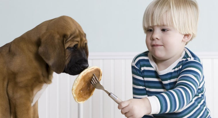 Why Might a Puppy Stop Eating or Drinking?