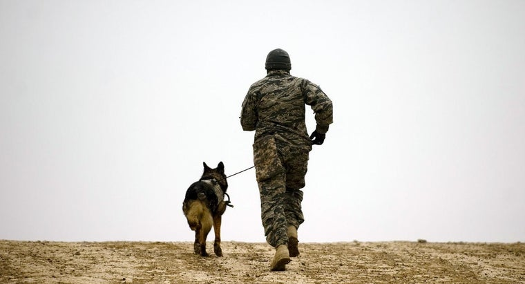 What Are Military Dog Breeds?