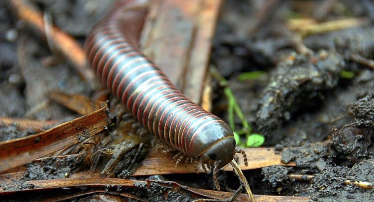 What Is a Millipede Infestation?