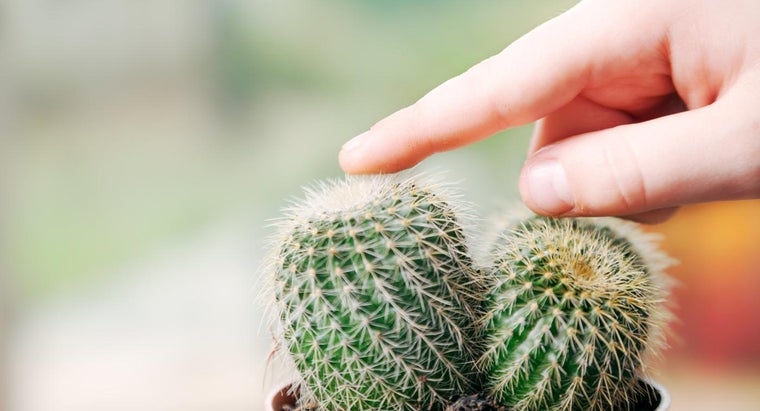 What Are Some Mini Cactus Facts?