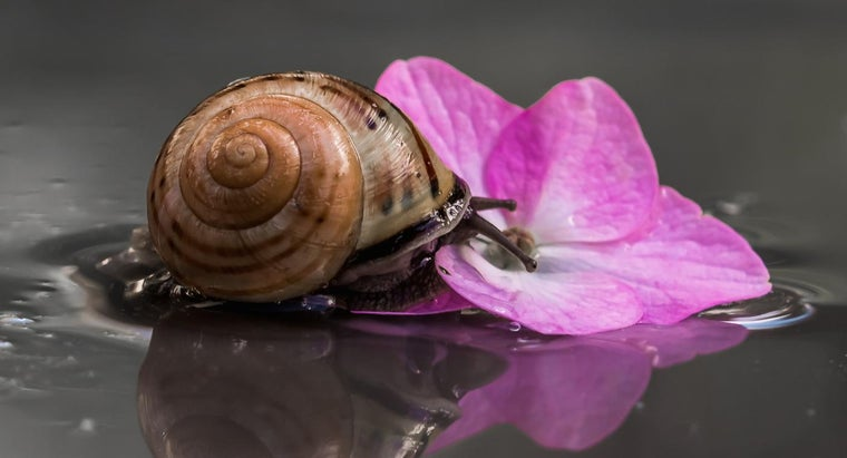 What Do Mollusks Eat?