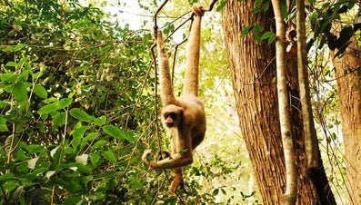 How Do Monkeys Survive in the Jungle?