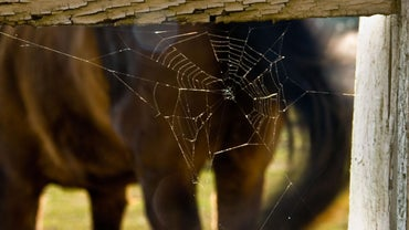 What Is the Moral of Charlotte's Web?