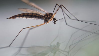 What Is a Mosquito Zapper?