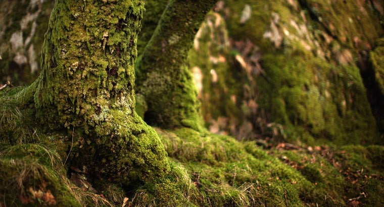 How Does Moss Reproduce?