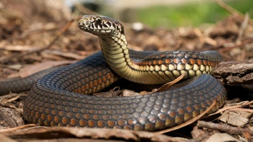 Will Moth Balls Keep Snakes Away?