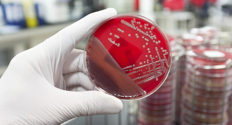What Is a MRSA Carrier?