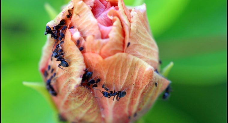 How Much Does an Ant Weigh?