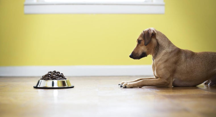 How Much Food You Should Feed a Dog?