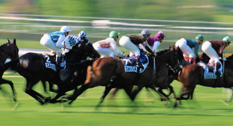 How Much Does a Racehorse Weigh?