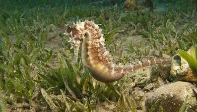 How Much Does a Seahorse Weigh?