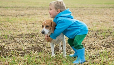 How Much Should a Beagle Weigh?