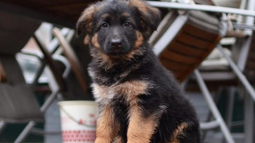 How Much Should You Feed a German Shepherd Puppy?