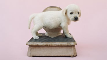 How Much Should My Puppy Weigh?