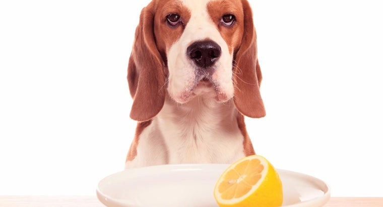 How Much Vitamin C Should a Dog Be Given?