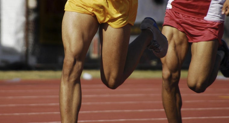 How Do Muscles Respond to Exercise?