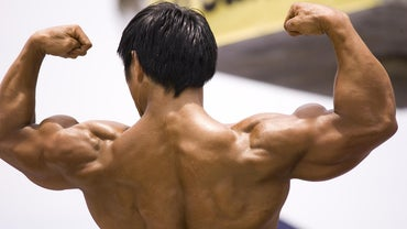 Why Is the Muscular System so Important?