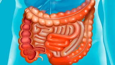 What Are the Names of the Parts of the Small Intestine?