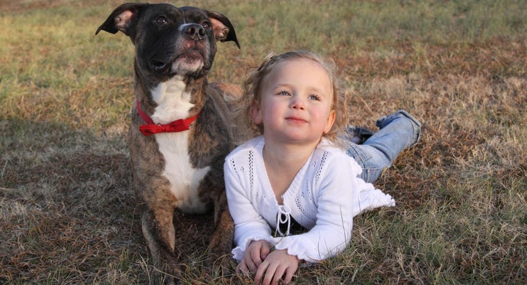 What Is a Nanny Dog, and Why Does It Have This Name?