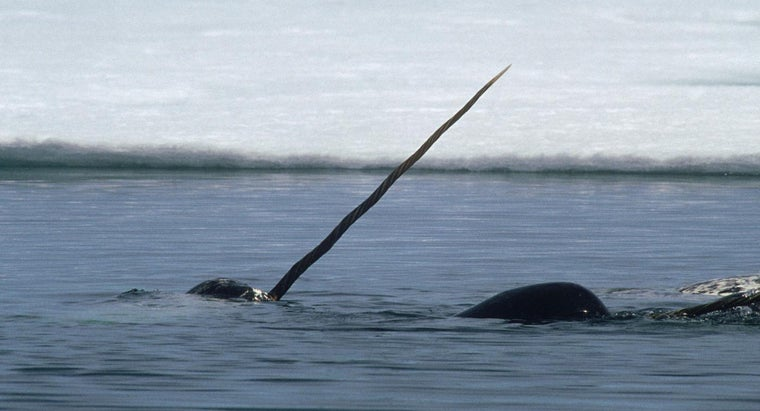 Where Do Narwhals Live?