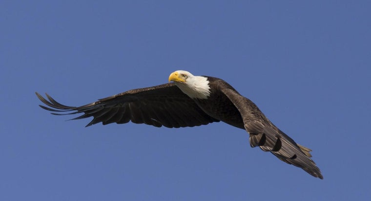 What Is the National Bird of the USA?