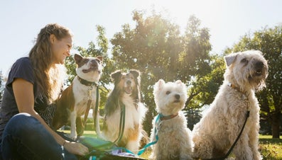 Do You Need Insurance for Dog Walking?