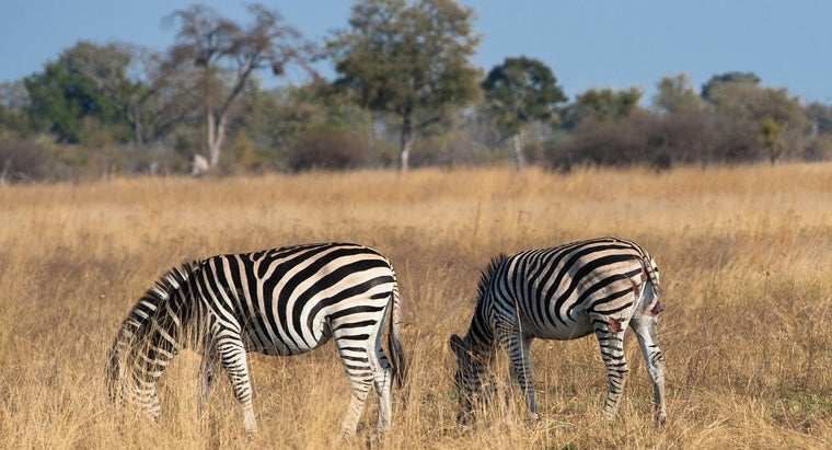 What Is the Niche of the African Zebra?