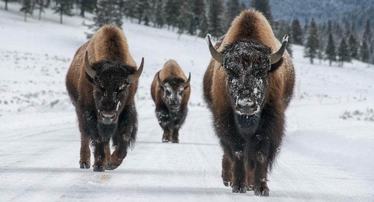 What Is Yellowstone Like in the Winter?