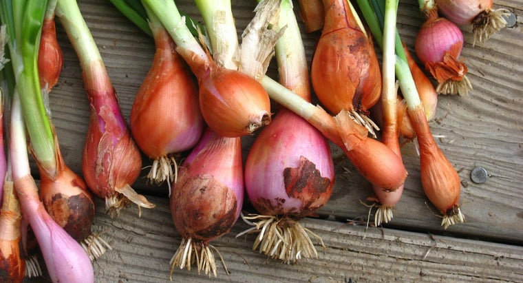 What Is the Nutritional Value of an Onion?