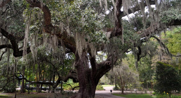 What Does The Oak Tree Symbolize Reference