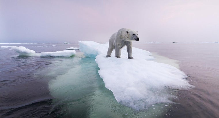 Which Ocean Contains the Most Icebergs?
