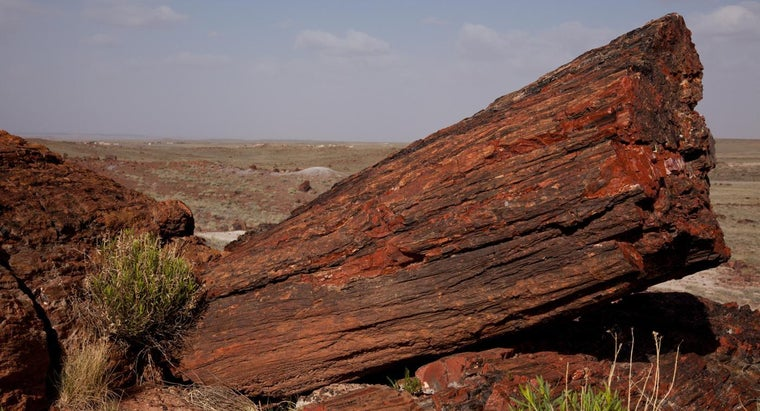 How Old Is Petrified Wood?