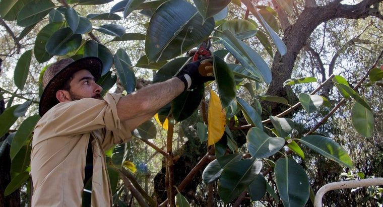 When Is the Optimal Time of Year to Trim Trees?