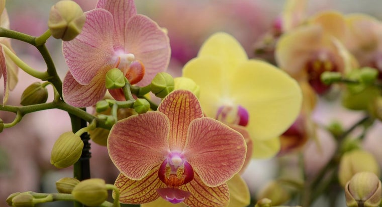 What Are Some Orchid Facts?